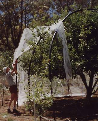 Dad netting trees