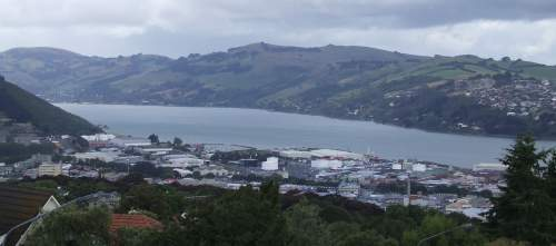 dunedin bay area seen from the hills west of town
