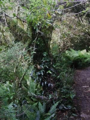 flora on path