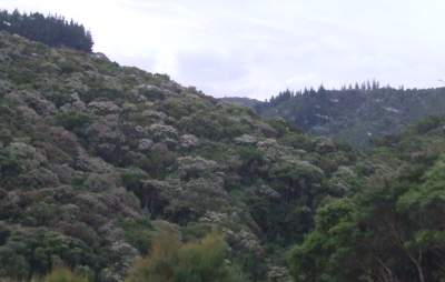 genuine NZ bush